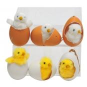 pulcino che esce dall'uovo