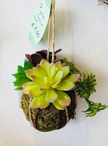 piante grasse decorarive